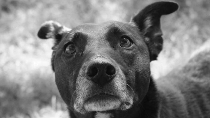 Dog Listening - Money Magnet E-book