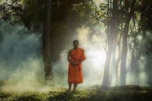 A Buddhist Monk Walking Through Sunlit Forest - Awakening Alchemy