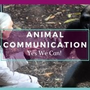 Jane Goddard Communicating with a Chimpanzee - Awakening Alchemy