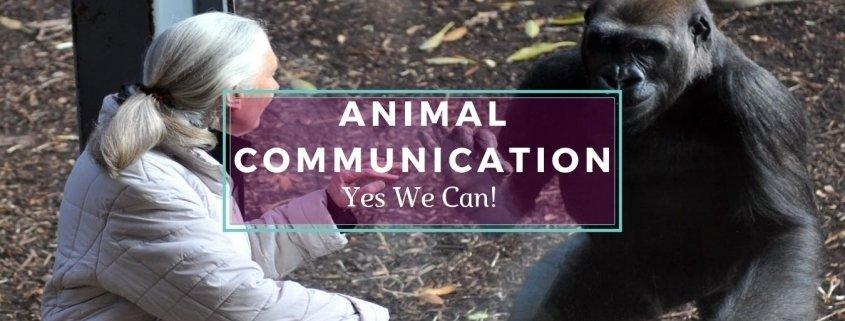 Jane Goddard Communicating with a Chimpanzee - Awakening Alchemy