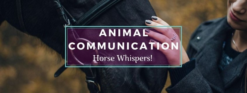 Hiorse Whispers Banner: closeup of Woman Talking to a Horse - Awakening Alchemy