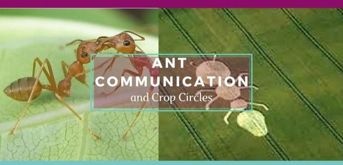 Banner Featuring Two Ants Communicating and an Ant Shaped Crop Circle - Awakening Alchemy