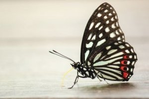 Black and White Butterfly - Awakening Alchemy