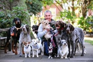 Cesar Millan with a Collection of his Dog Friends - Awakening Alchemy