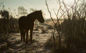 Chocolate Coloured Pony in amongst brish - Awakening Alchemy