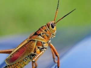 Closeup Photo of a Grasshopper - Awakening Alchemy