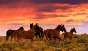 American Wild Mustangs Roaming a Sunset Plain - Awakening Alchemy