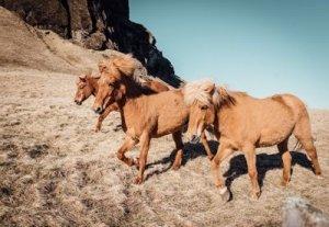 Wild West Mustangs Grazing Free - Awakening Alchemy