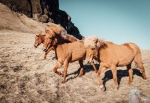 Three Wild Horses Roaming the Hills - Awakening Alchemy