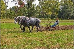Two Horses Draw a Plough with a Farmer - Awakening Alchemy