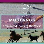 Mustang Banner: Wild Mustangs Running Free - Awakening Alchemy