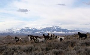 A Herd of Wild Horses in front of Majestic Mountains - Awakening Alchemy