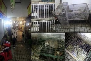 Caged Animals Stacked Haphazardly in Wuhan Wet Market